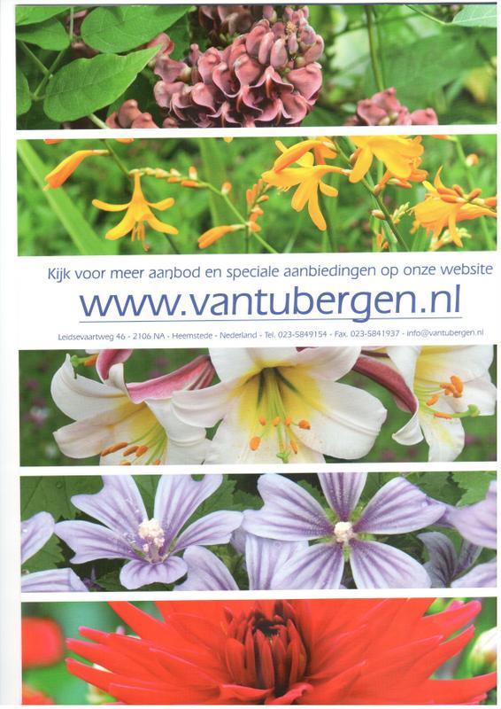 18-Van Tubergen 2.JPG