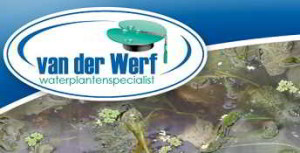 waterplantenspecialistvdwerf